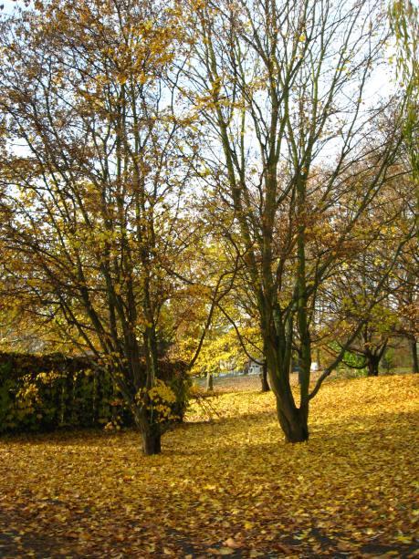 Fall in Nuremberg, Germany (5 years ago!)