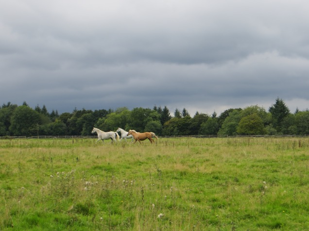 Horses galloping in a field in rural Surrey. Taken by me early last month.